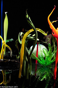 Chihuly-Through The Looking Glass. Museum of Fine Arts, Boston 7-9-11