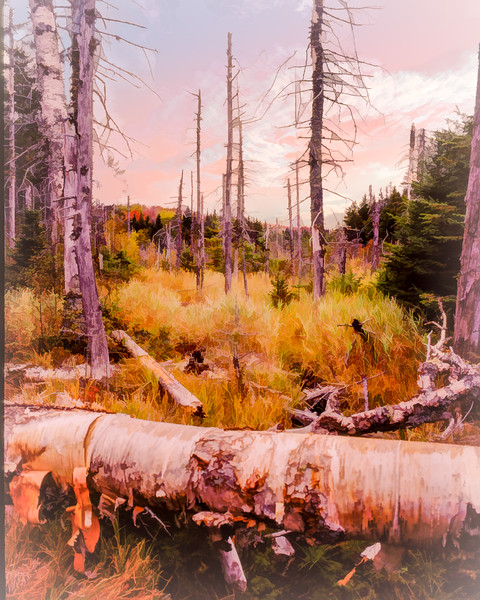 Vermont woodland bog autumn.