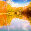 Bright foliage reflected in Shetucket river Eastern Ct.