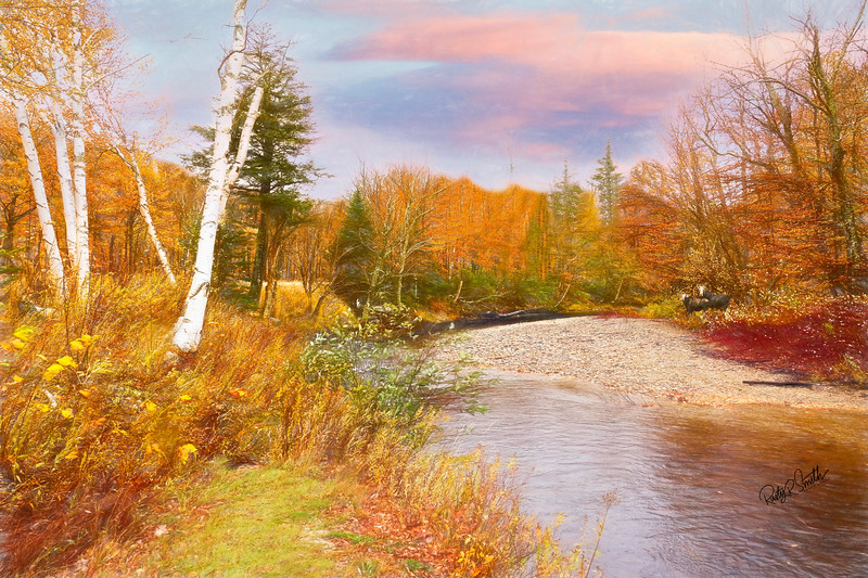 Autumn New Hampshire landscape. Two moose standing beside a slow flowing  brook,running through bright foliage.