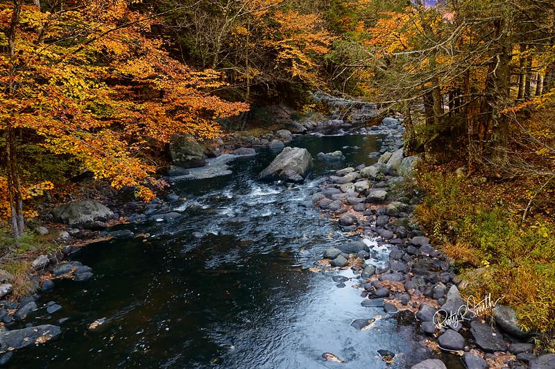 Fresh water stream flowing through autumn forest.