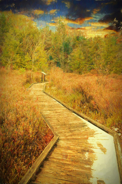 A boardwalk that can represent our lifes journey.