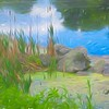 A soft  peaceful,natural setting of cat-o-nine tails and stones in a clear water pond.