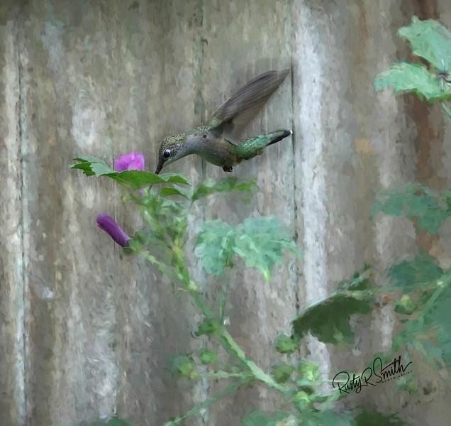 Hummingbird on Pink flower