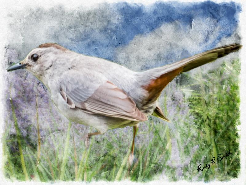 Art photo of Gray cat bird.