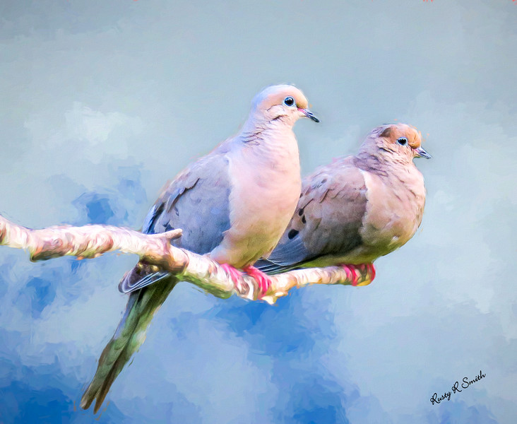 A pair of mourning doves perching on a branch.