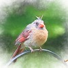 A young cardinal pearching on a rail.