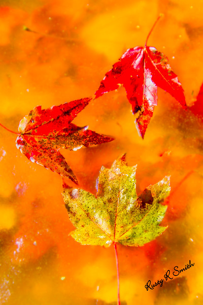 Three fallen leaves.