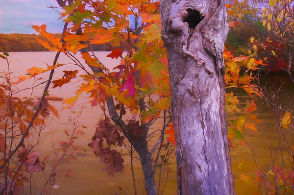 A natural fall stilllife. Bright leaves and shaggy tree trunk.