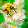 art photo bee on flower