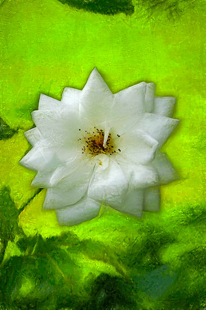 Artized photo of a single white blossom.