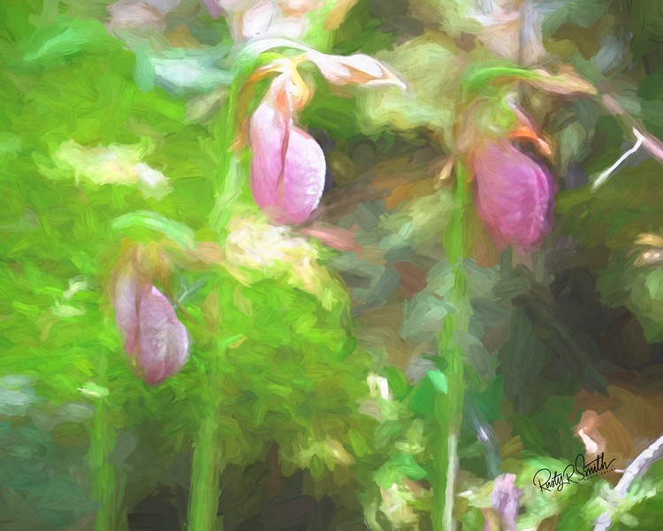 Three Lady Slippers.