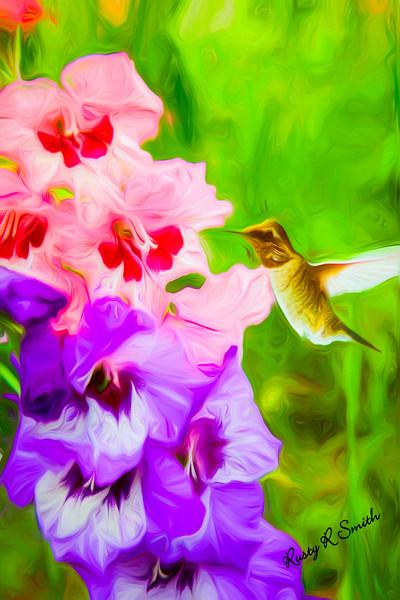 Hummingbird on Gladiolas.