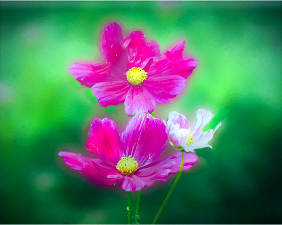 Soft Pink Flowers