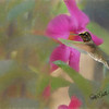 Hummingbird on Pink flower.