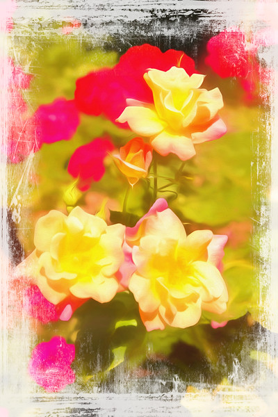 An art photograph of a group of red and yellow roses.