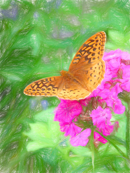 Great spangled fritillary  butterfly on pink flower.