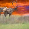 Two  Pennsylvania elk.