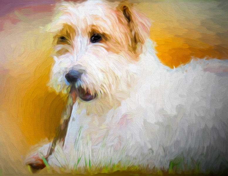 Tuffy the Russell Terrier