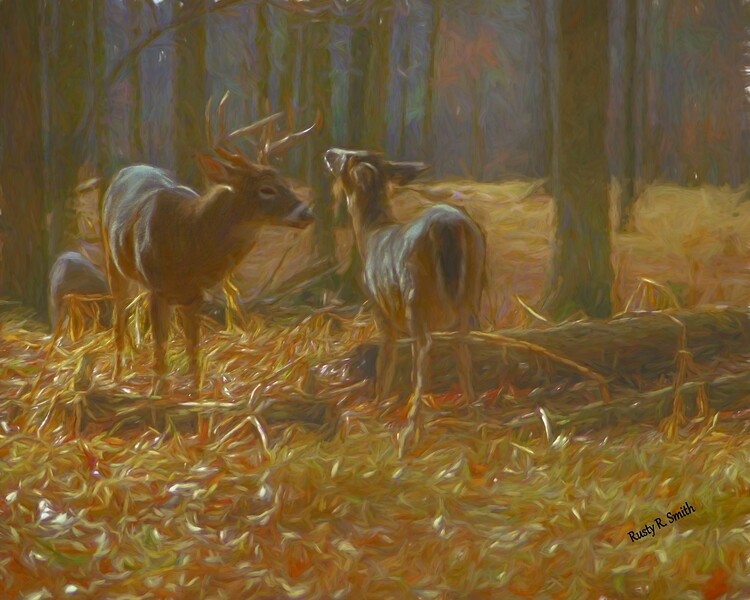 Soft art photograph of a whitetailed buck and doe.