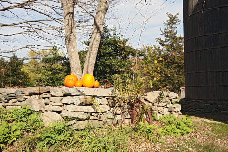A horizontal stock art photo showing a stone wall with pumpkins on the top and a beautiful fall day.