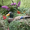 A vertical stock photograph of a mallard duck sculpture in a colorful still life setting.