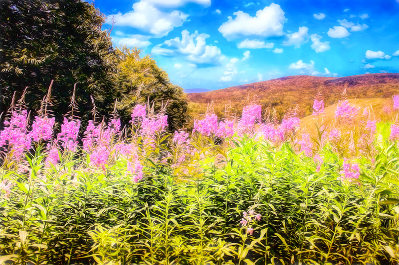 Art photo of Vermont rolling hills with pink flowers in the foreground.