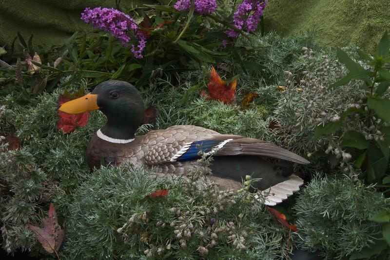 A horizontal stock photograph of a mallard duck sculpture set in a flower and green arrangement.