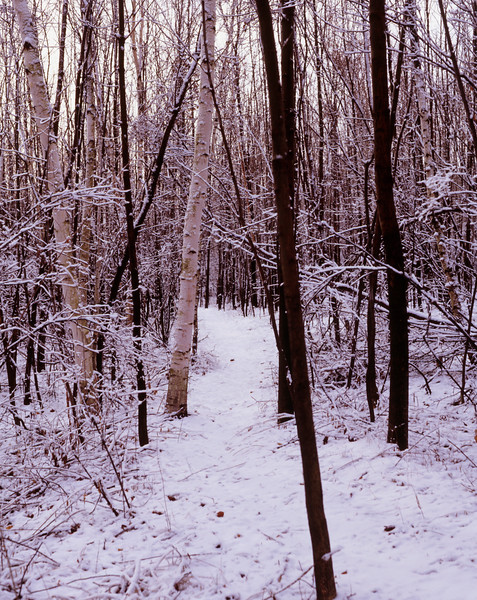 A vertical stock photo showing a snowy path through the winter woodland.