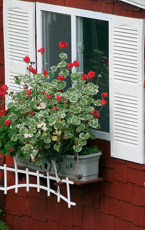 Vertical stock photograph showing a  white shuttered window in a red wall and a flower box decorated with beautiful geraniums.
