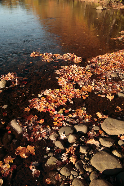 A Vertical Stock Photograph of water with fall leaves and stone in the foreground.