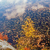 A Vertical Stock Photograph of autumn leaves and clouds reflecting in water.