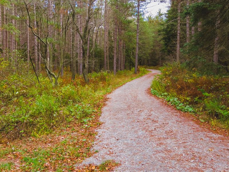digital art photograph of a dirt road winding through a pine forest.