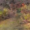 Fresh water stream meandering through late fall foliage