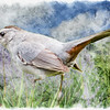 Art photo of Gray cat bird.