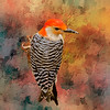 Red Belied Woodpecker