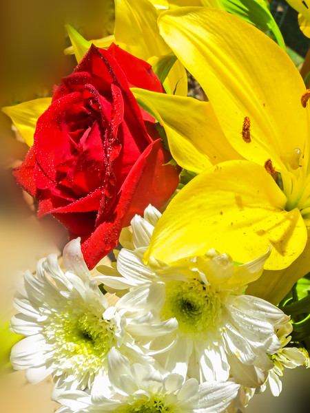 A beautiful flower arrangement,daisies,red rose,yellow lily and white Chrysanthemums