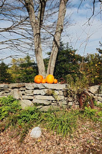 A vertical stock art photo showing a stone wall with pumpkins on the top and a beautiful fall day.