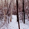 A vertical stock photo showing a snowy path through the winter wood