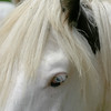 A vertical stock photograph.A closeup head of a gypsy vanner horse.