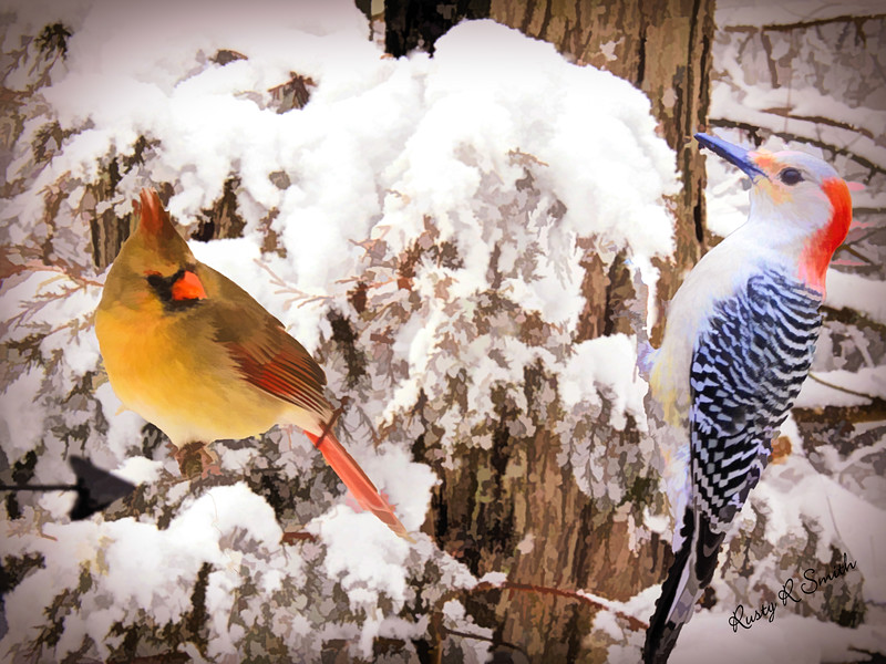 Art photo of female cardinal and red belied woodpecker