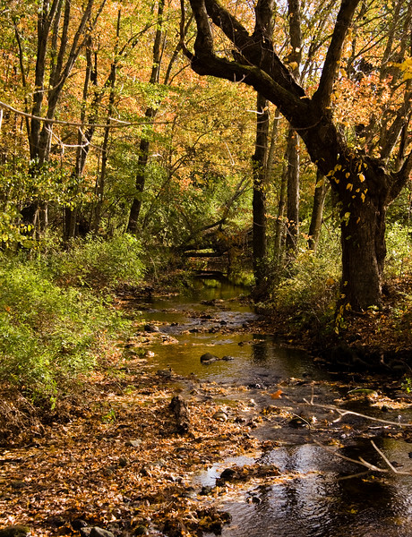A vertical stock photograph of a small stream surrounded by bright autumn colors.