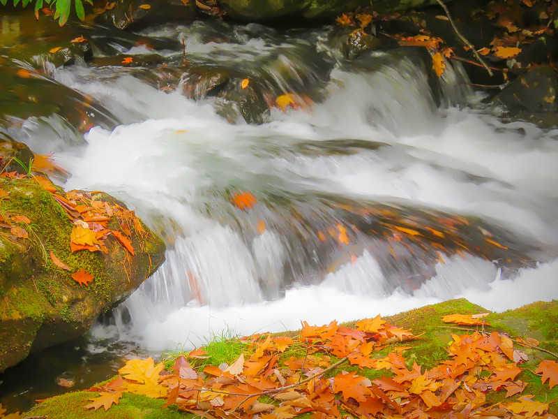 Autumn leaves on flowing water