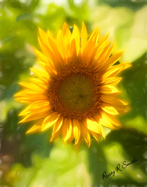 Lonely but lovely Sunflower