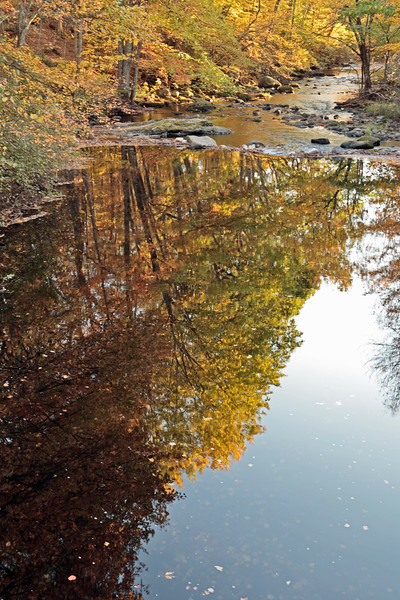 A Vertical Stock Photograph of autumn reflection in the Little River Eastern Connecticut.