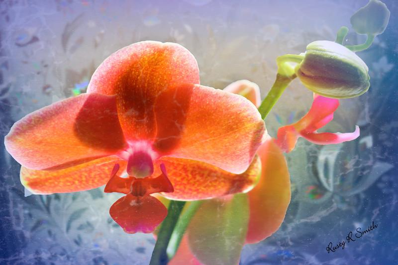 A single closeup orchid blossom.