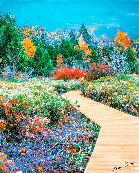 Boardwalk through autumn nature