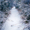 Snow covered trail.