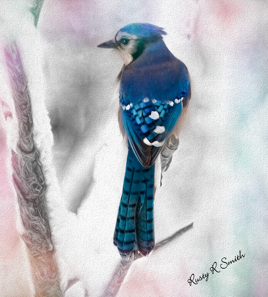 A Digital Art  photograph of a Bluejay pearching on a snowy branch.