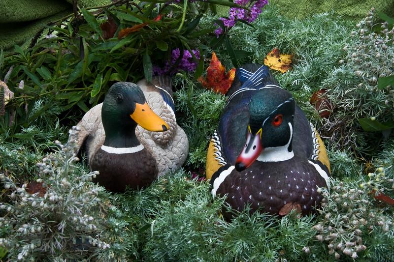 A horizontal stock photograph of a mallard duck and woodduck sculpture set in a flower and green arrangement.